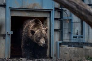 Pécsi állatkert medvefigyelés